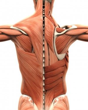 A Critical and Theoretical Perspective on Scapular Stabilization: What Does It Really Mean, and Are We On the Right Track?