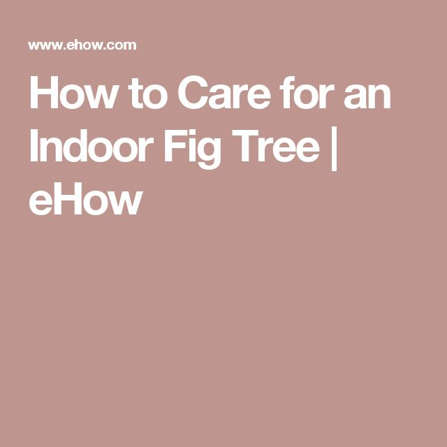 How to Care for an Indoor Fig Tree | eHow