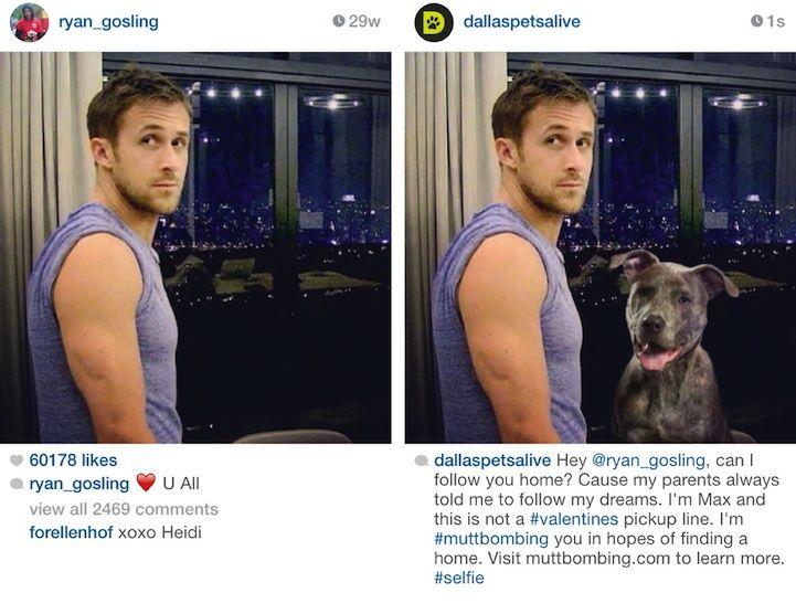 Dogs Photobomb Celebrity Photos to Boost Pet Adoption