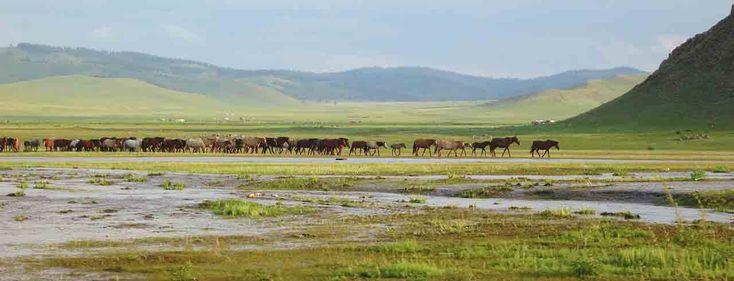 Catherine Waridel a suivi les pas de Guillaume de Rubrouck, de Crimée jusqu'en Mongolie - http://www.mongolie-a-cheval.com/catherine-waridel.html