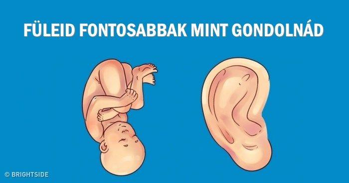 Mit árul el rólad a füled?