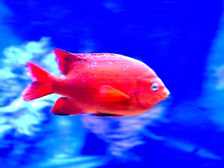 Tropical Fish Screensaver