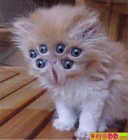 [Image: 28b1cc2faa2db203cd90bbfbc682fe80--funny-...y-cats.jpg]
