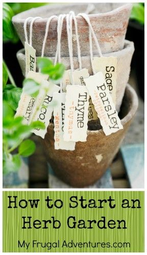 How to Start an Herb Garden- easy tips to get started!