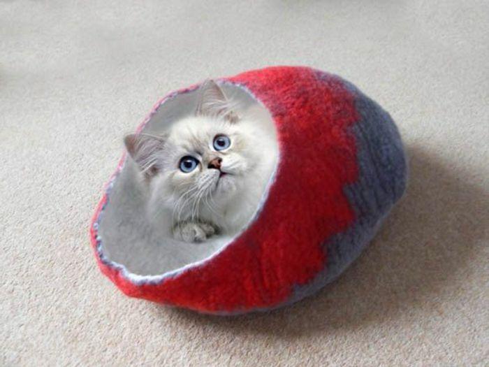 katzen zubehör  kleine katze mit blauen augen in kokon bett