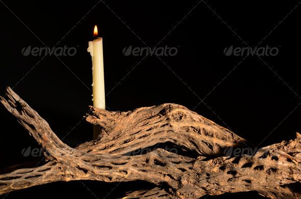 Candle and Cholla ...  arizona, bright, cacti, cactus, candle, cholla, dead, desert, desolate, landscape, light, open, orange, outdoors, outstanding, prominent, range, ray, saguaro, sky, solitude, sonora, southwest, southwestern, stately, tree