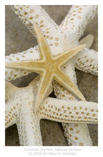 #ocean #starfish #beige