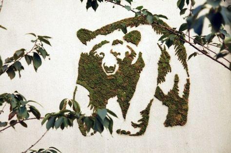 moos graffiti bilder bär graffiti erstellen graffiti lernen