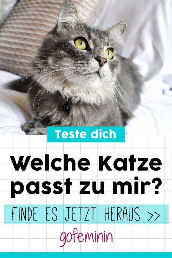 Mach Den Test Welche Katze Passt Wirklich Zu Mir