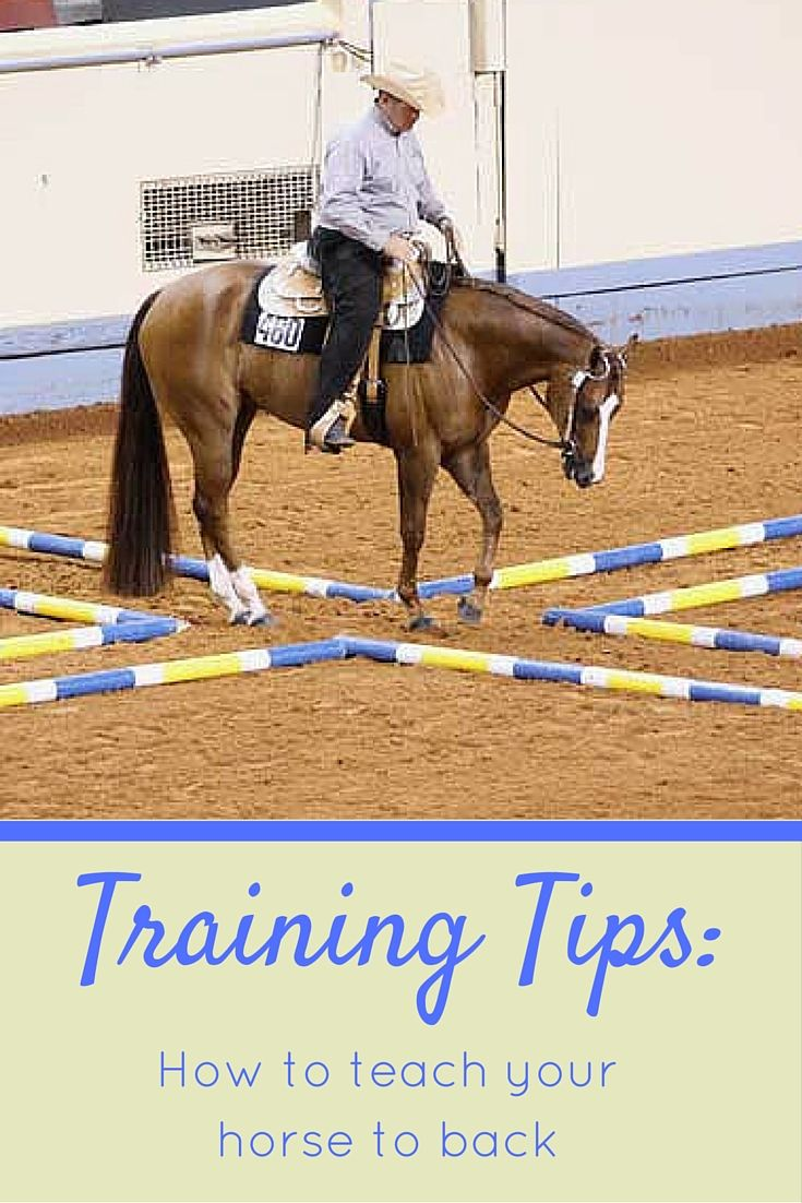 Heed these horse training tips for a safer, more finished horse. Learn how to properly teach a young or inexperienced horse to back for best results.