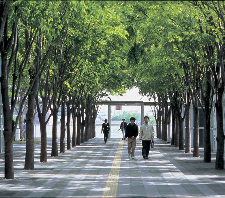 trees in urban landscape Diversity is the key when it comes to all urban landscapes a healthy urban forest includes many different kinds (many different genus) smartly planted without a monoculture of any one kind of tree planting many kinds of trees alternating with different genus is the key.