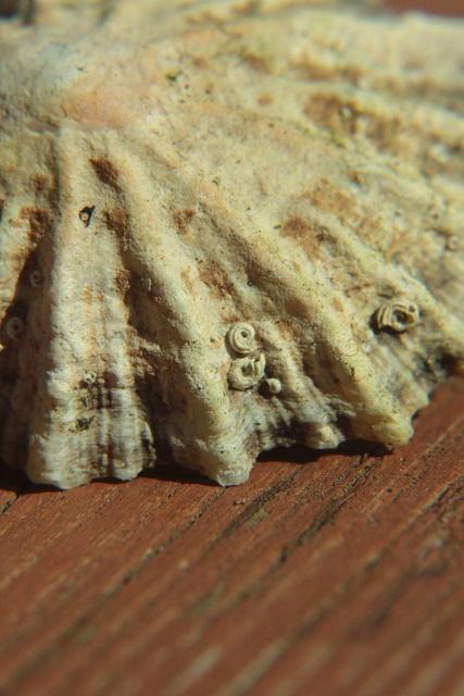 close up shell, via Flickr.