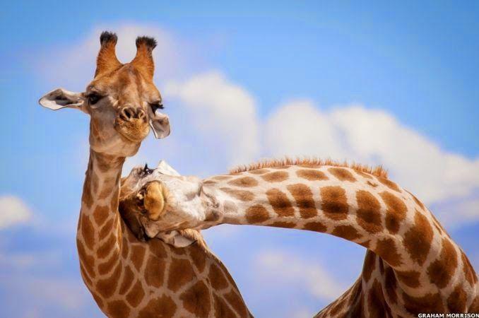 maliaria: Fotos de animais em poses inusitadas e divertidas são premiadas em Londres