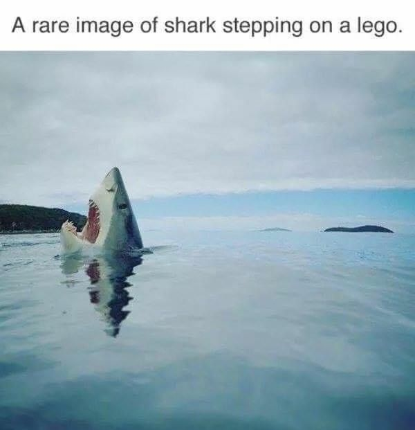 29 Funny Memes From Old And New Times In 2021 Shark Stepping On Lego Step On A Lego Funny Animal Pictures