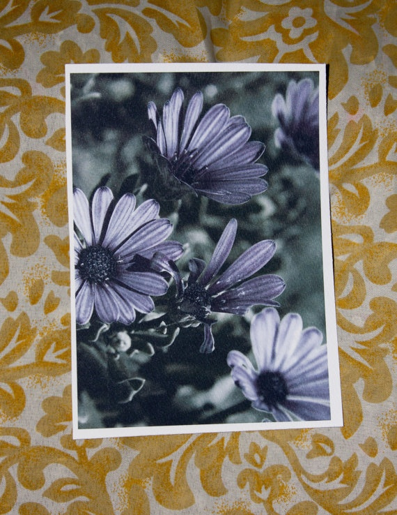 Full Bloom Daisy Postcard by amberroyaltyboutique on Etsy, $2.50