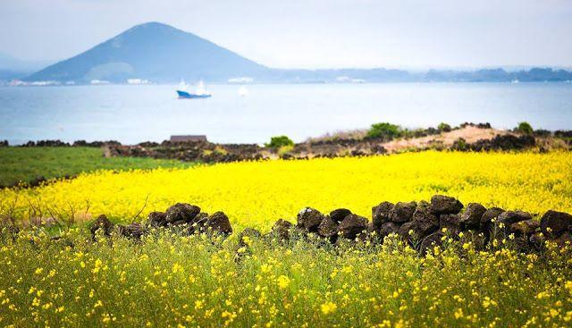 Renacimiento del Romanticismo: La bella y romántica Isla Jeju