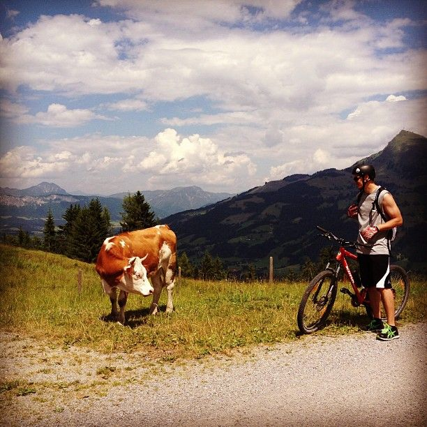 #mountainbike #cow