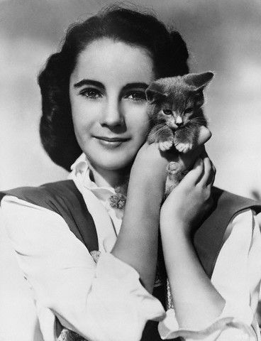 famous people + cats: Elizabeth Taylors, Famous People, Design Handbags, Elizabethtaylor, Pet Memories, Funny Photo, Kittens, Liz Taylors, Cat Lovers