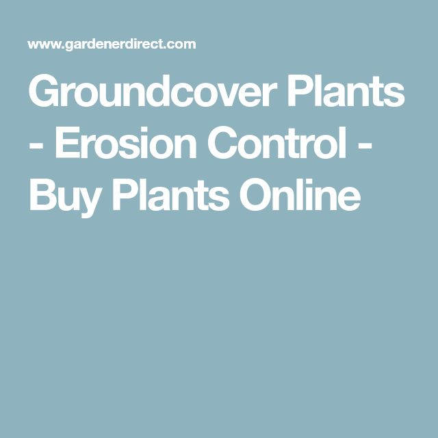 Groundcover Plants - Erosion Control - Buy Plants Online