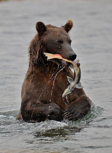 Bears.......