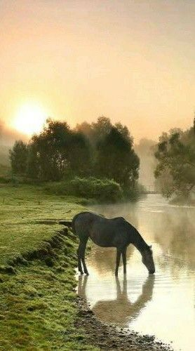 1372 Best Images About Horses Amp Ponies Iii On Pinterest