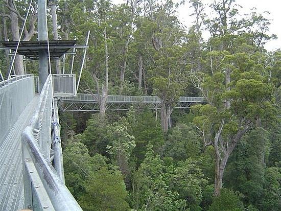 Tahune Airwalk, Tasmania - Australia