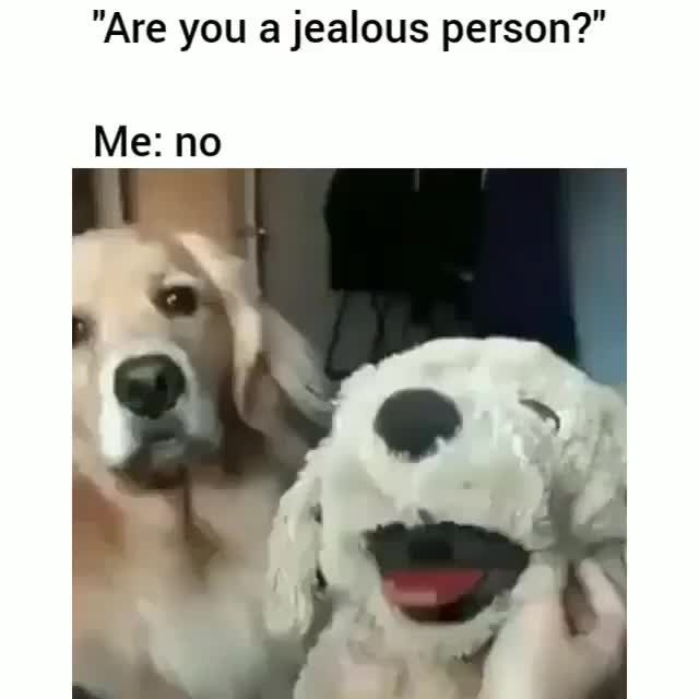 There Can Be Only One Good Boy Funny Animal Pictures Funny Animal Memes Funny Pictures Tumblr