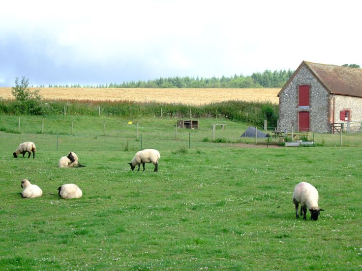 Gumber-farm