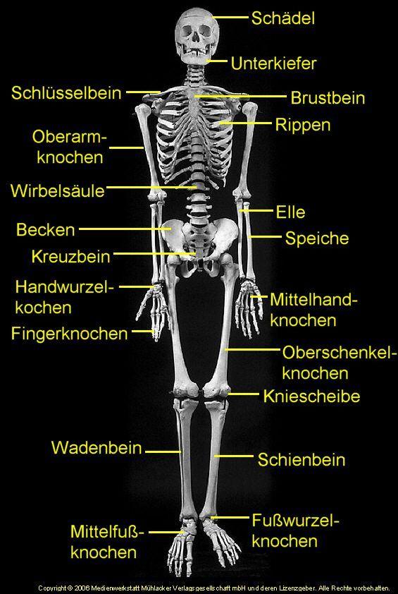 Skeleton Deutsch