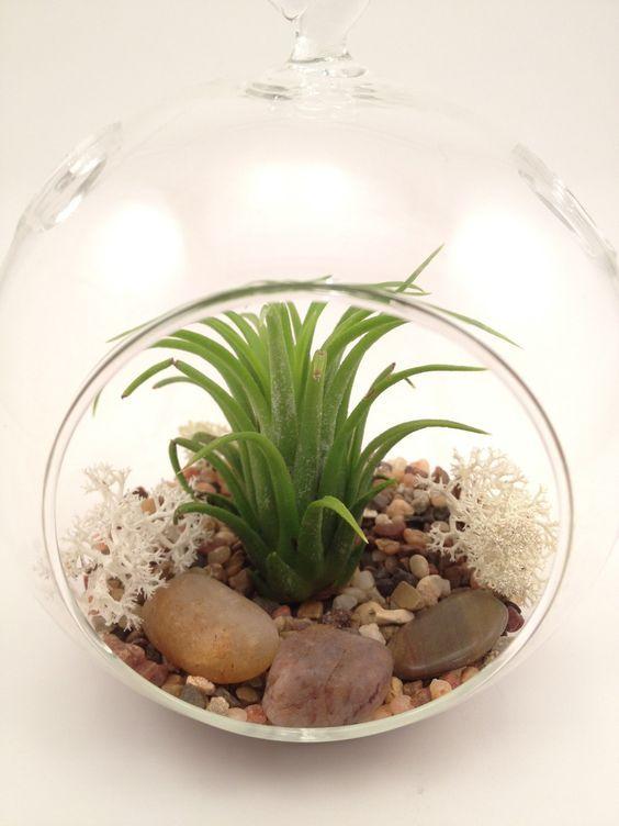 9 best succulents images on pinterest succulents succulent plants and house plants - Kit terrarium plante ...