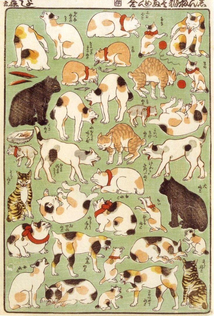 The New Edition, Many Varieties of Cats (Shinban neko no ryômen awase, しん板 猫尽両めん合)