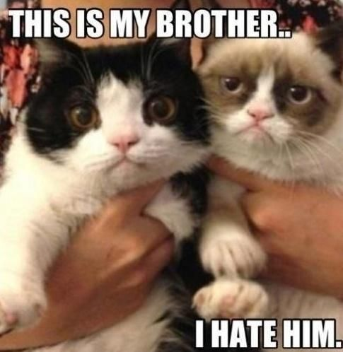 Grumpy Cat I think I like your bro so stop picking on him and go pick on the idiots of the world