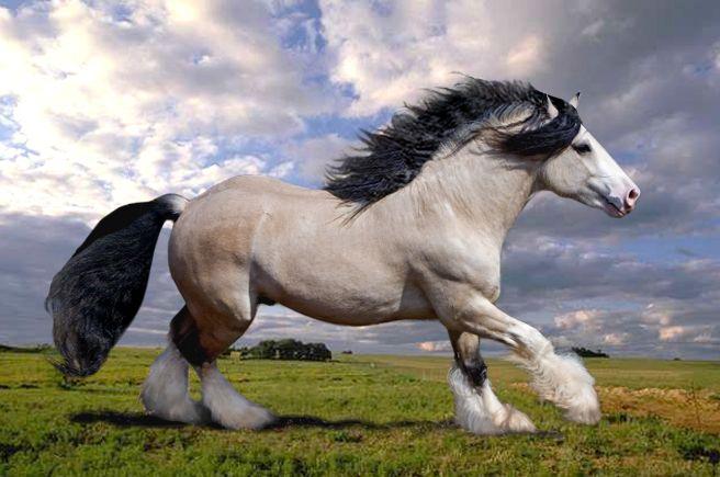 beautiful, powerful draft horse