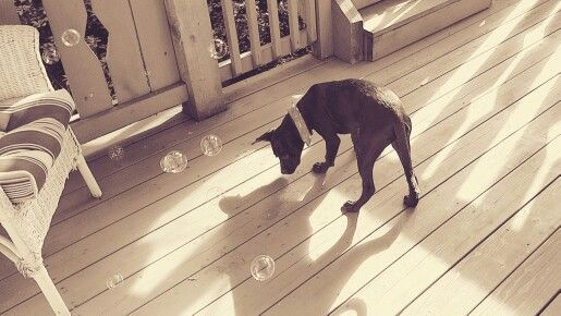 Cute puppy with bubbles