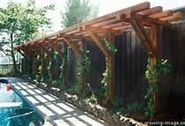 Arizona trellis - Bing Images