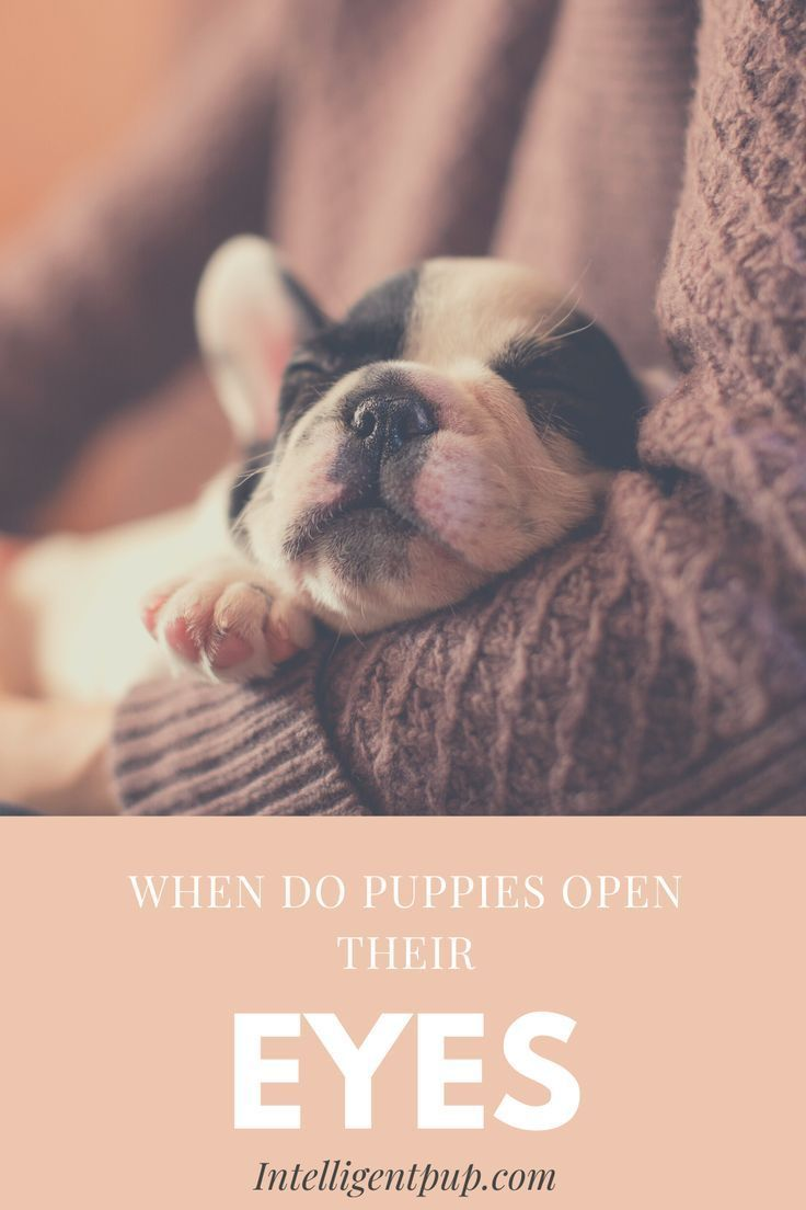 When Do Puppies Open Their Eyes In 2020 Girl And Dog Newborn Puppies Big Dog Toys