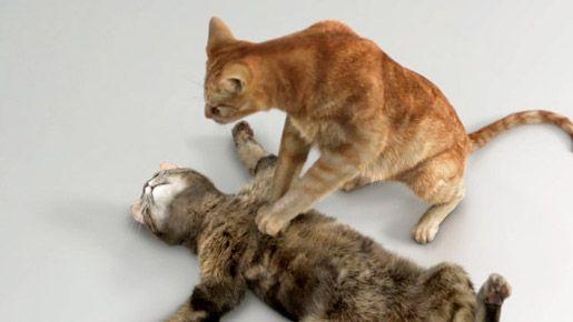 Cat Pride Cpr Video