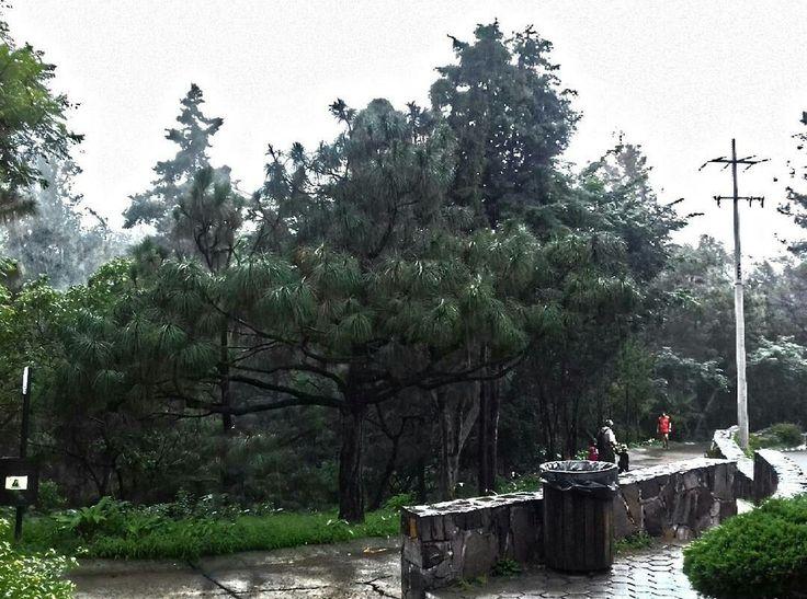 Bosque Colomos una mañana lluviosa mientras hacia mi servicio social.