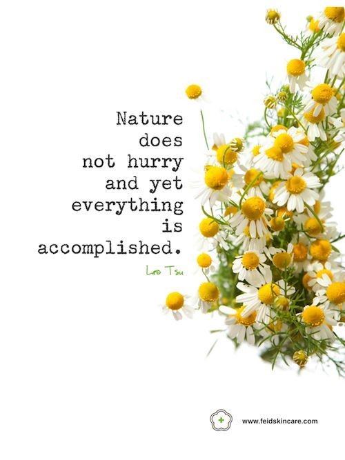 Inspirational quote harnessing the wisdom of nature. Fei'd natural skin care.