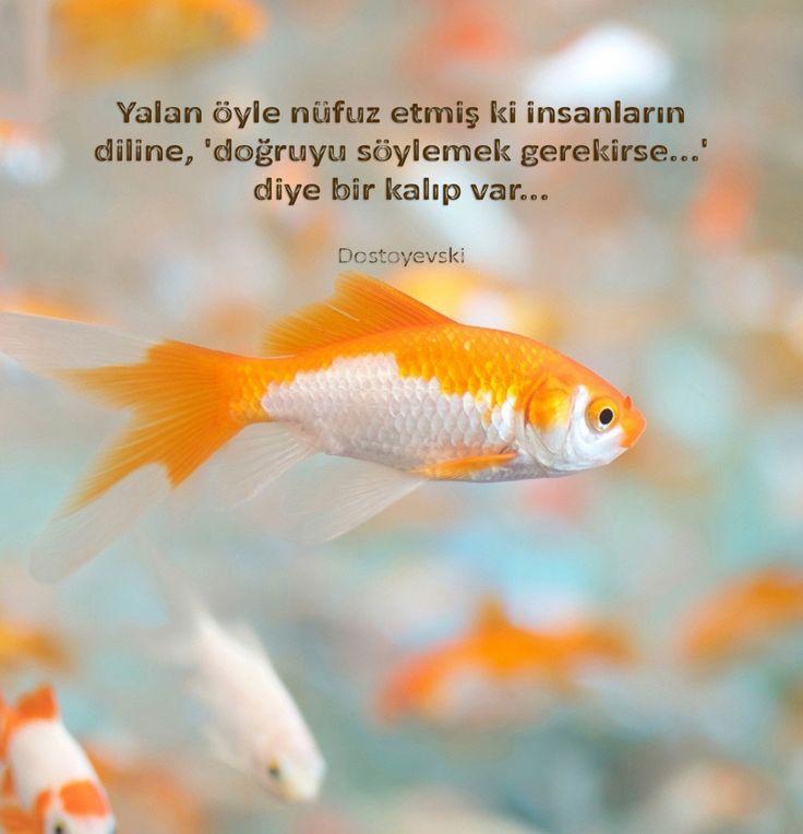 Yalan öyle nüfuz etmiş ki insanların diline, 'doğruyu söylemek gerekirse...' diye bir kalıp var..  Dostoyevski
