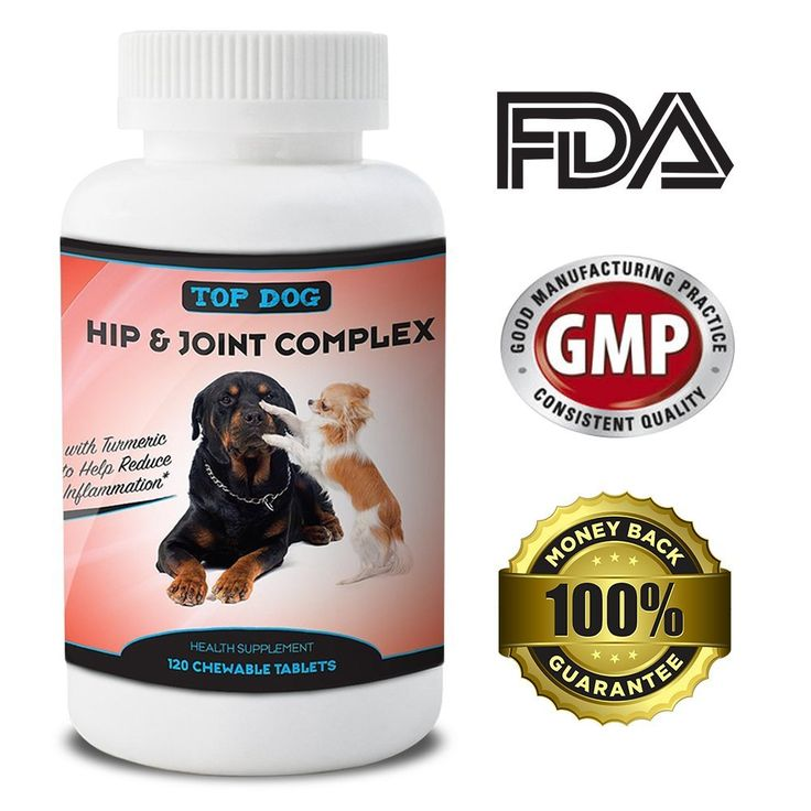 Dog Arthritis Pain Relief Supplement Prevents Euthanasia