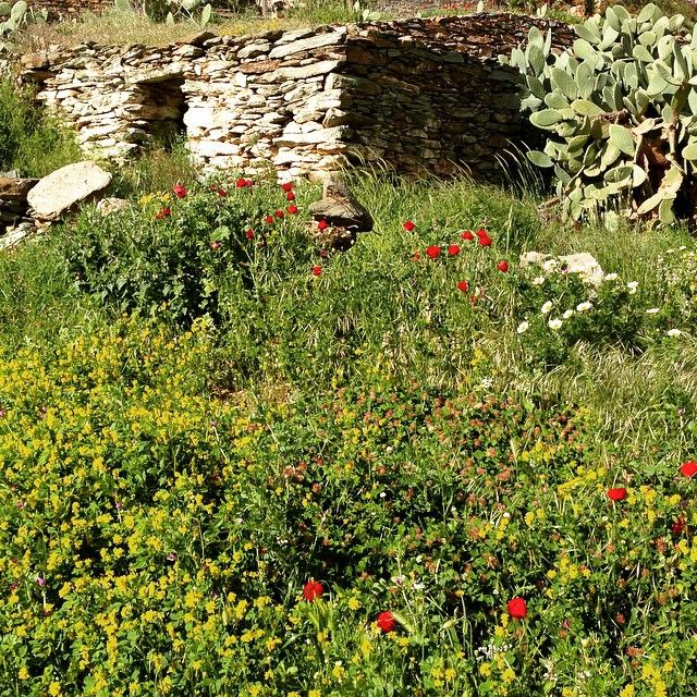 #stone_house #landscape #green #spring #flowers #greece #discover_Greece #travelblog #travel #traveler #walking #picoftheday