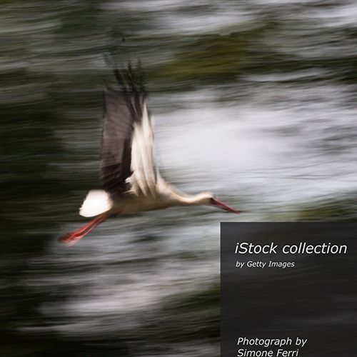 Flying stork panning movie image technique Canon 40D F36 ISO 100 EF L 100-400mm  http://www.istockphoto.com/photo/flying-stork-panning-movie-image-technique-58118854 #istock #istockphoto #gettyimage #fashion #lifestyle #nikon #d800 #instaart #igersitalia #art #artlover
