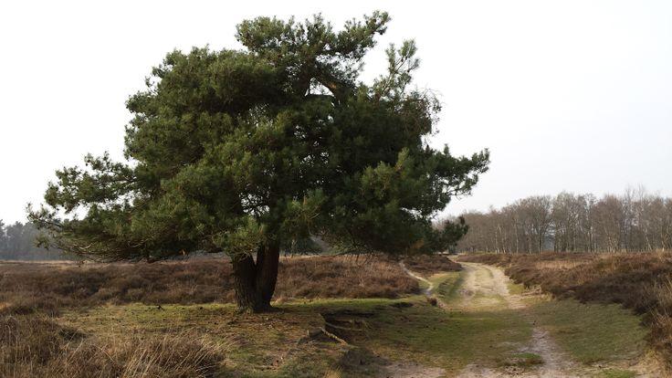 Gasterense Duinen, Drenthe