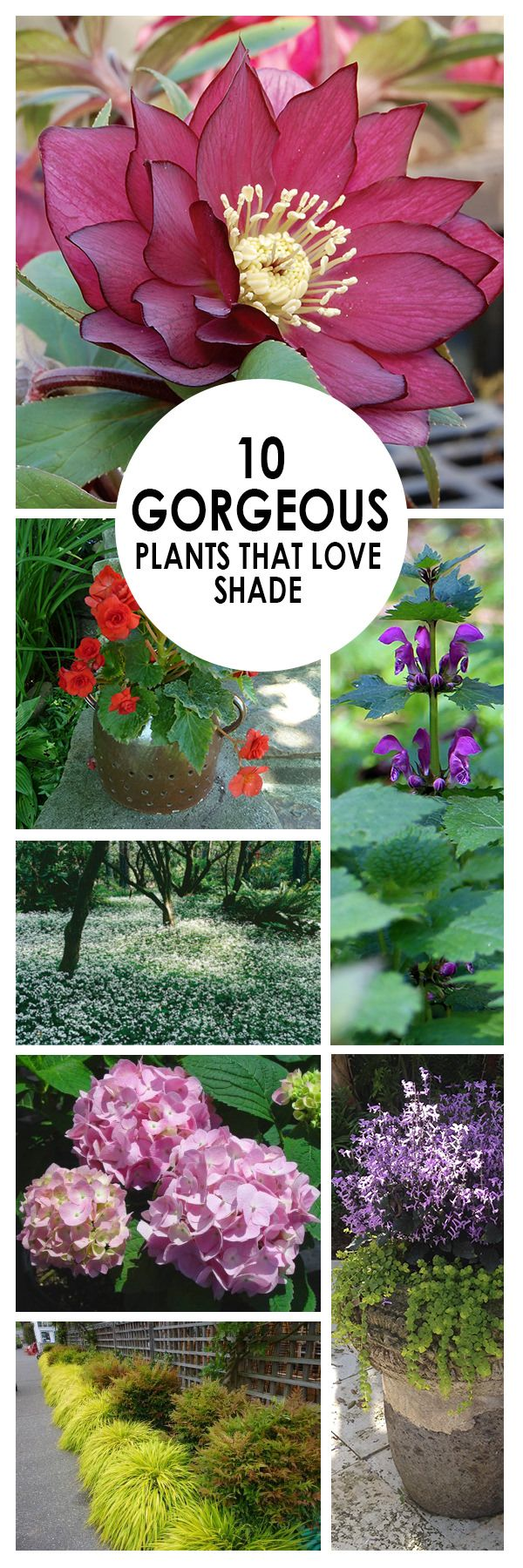 Don't overlook the abandoned shady spot of your garden, there are definitely some gorgeous plants that you can grow there!