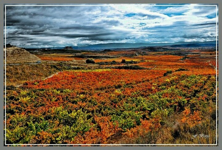 Viñedos de La Rioja/ España
