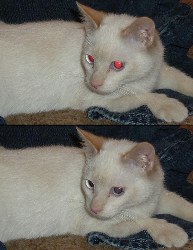 Aprenda a remover olhos vermelhos com PhotoFiltre Studio X e PhotoScape