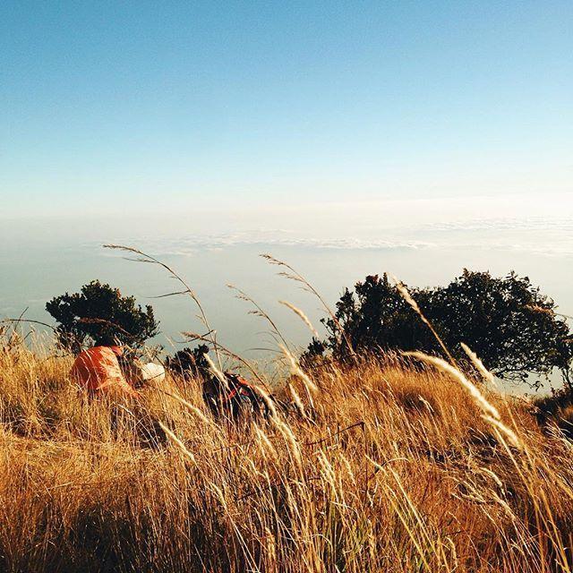 Halaman depan. Nglaras.  #liveauthentic #nature #vscogood #exploreindonesia #jelajahindonesia #wonderfulindonesia #vsco #sky #skyporn #indotravellers #instagood #mountain