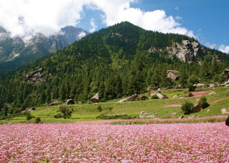 Spring at Rakcham Valley, Himachal Pradesh. #ColourfulHorizons