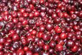 All About Cherries - Guide to Cherries